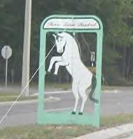 Horse on University Avenue